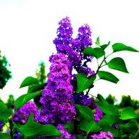 Весенний цвет. :: Владимир Драгунский