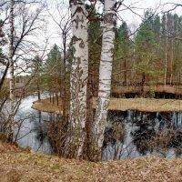 Речка Бужа у села Тихоново :: Валерий Толмачев