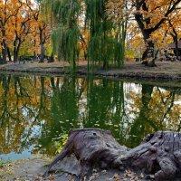 Упоительная осень. :: Тамара Бучарская