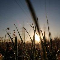 трава на рассвете :: Ольга (Кошкотень) Медведева