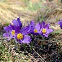 Лесные первые цветы :: Ната Волга