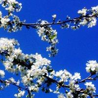Весна ! Вот она - ВЕСНА ! :: imants_leopolds žīgurs