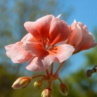 в розовом цвете :: linnud