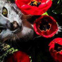 случайная гостья Тина :: Роза Бара