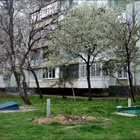 Цветущий апрель под моими окнами :: Нина Корешкова