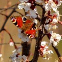 весна - красна :: Александр Прокудин