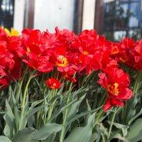 Солнечные цветики :: Svetlana Bikasheva