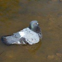 ванны :: linnud