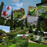 Ботанический сад в Берлине :: spm62 Baiakhcheva Svetlana