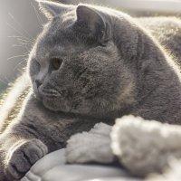 Хорошей кошки должно быть много..) :: Лилия .