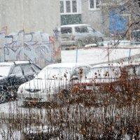 Снегопад-1 :: Дмитрий Петренко