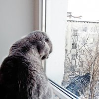 Около окошка  Поселилась кошка. Все на улицу глядит, Птичек глазом сторожит. :: Анна Приходько