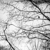 Конец апрелю... ждём весну... :: Сергей В. Комаров
