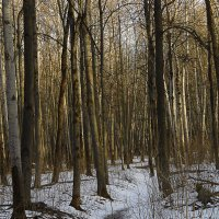 лес :: Юлия Денискина