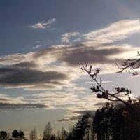 Вечерние облака :: Тамара Лисицына