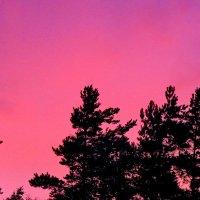 Малиновый закат :: Светлана