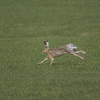 А вот кому зайца-выбегайца! :: Елена Шел(Швыдун)