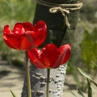 Пара тюльпанов :: Анастасия сосновская