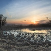 Утро на болоте :: Сергей Михайлович