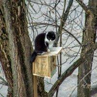 Коты прилетели на лапах весну принесли !!! :: Анатолий. Chesnavik.