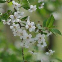 цветы :: Владимир