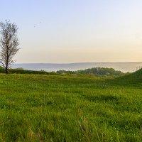 Травы :: Бронислав Богачевский