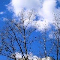 Весенее небо :: Самохвалова Зинаида