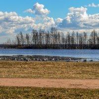 В ожидании весны :: Valerii Ivanov