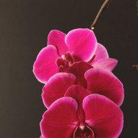 Орхидея :: Eduard Mezker