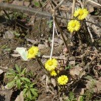 Первые цветы :: Наиля