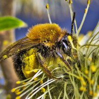 Пчелка в мае :: Ник Мелон
