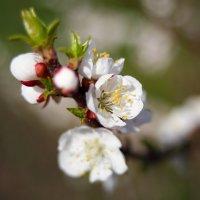 Весеннее... :: Анатолий __