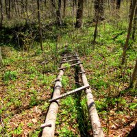 Лесные зарисовки :: doberman