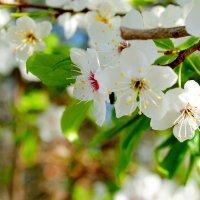 Идёт весна :: Вячеслав Михеев