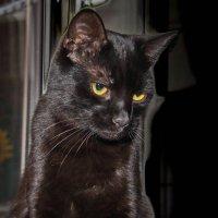 Кошка на окошке. :: Маргарита ( Марта ) Дрожжина
