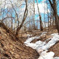 О последнем снеге ... :: Андрей Заломленков