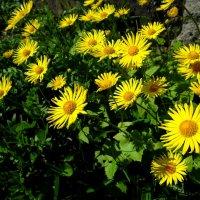 Весна радует.. :: Антонина Гугаева