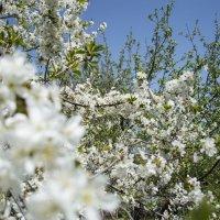 мой сад :: Дмитрий Т