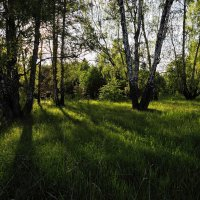 летом :: Сергей