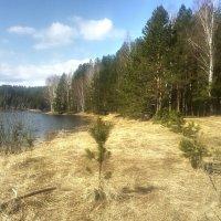 На берегу лесного озера :: Игорь Ковалевский