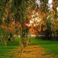 Тёплое утро :: Alexander Andronik