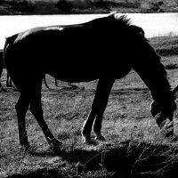 Ходят кони над рекою... :: Валерия  Полещикова