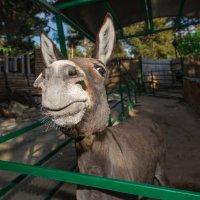 Контактный зоопарк, Олимп :: Ruslan --