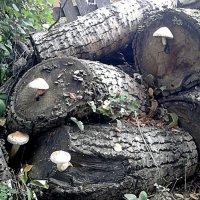 Выросли грибы, да несъедобные. :: Марина Китаева