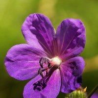 Цветок :: Виктор Колмогоров