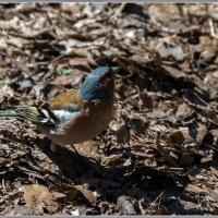 Про птиц :: Владимир Белов