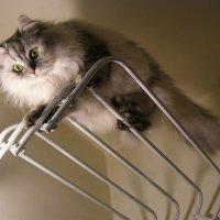 Кошечка :: Анна Воробьева