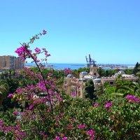 Весна в Малаге :: Ольга