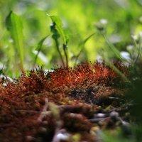 Муравьиный лес :: Ирина Сивовол