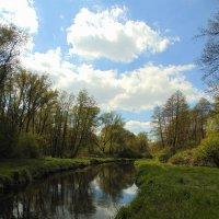 Весенние прогулки в лесу :: spm62 Baiakhcheva Svetlana